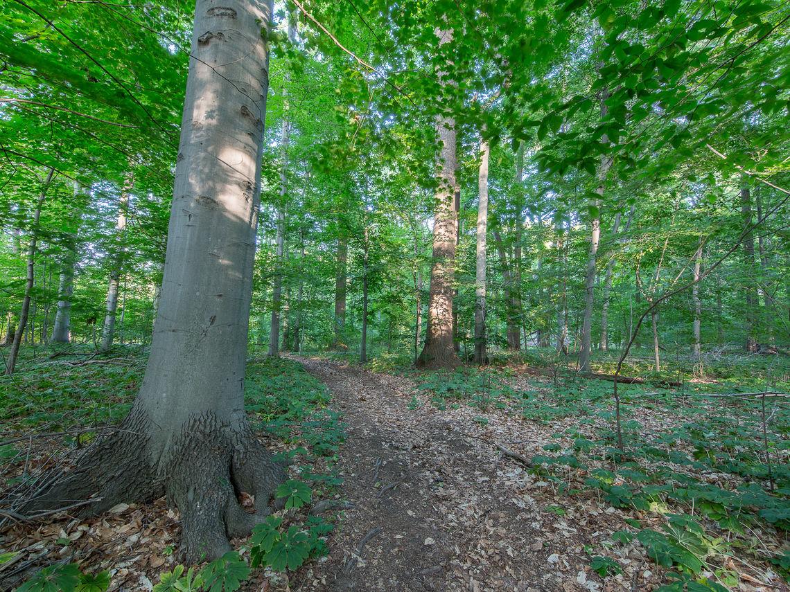 campwoods0615 17%